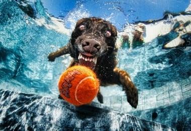 Seth-Casteels-Underwater-Dogs-9