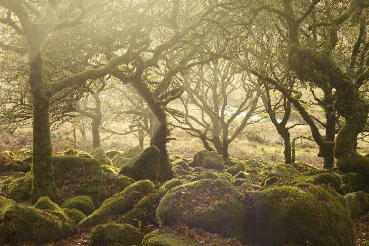 british Countryside 1 1