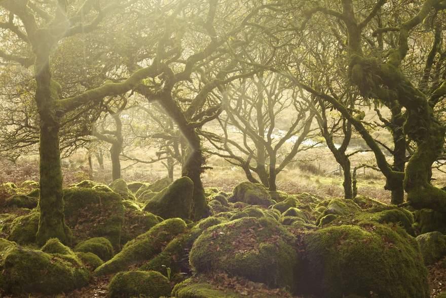 british Countryside 1