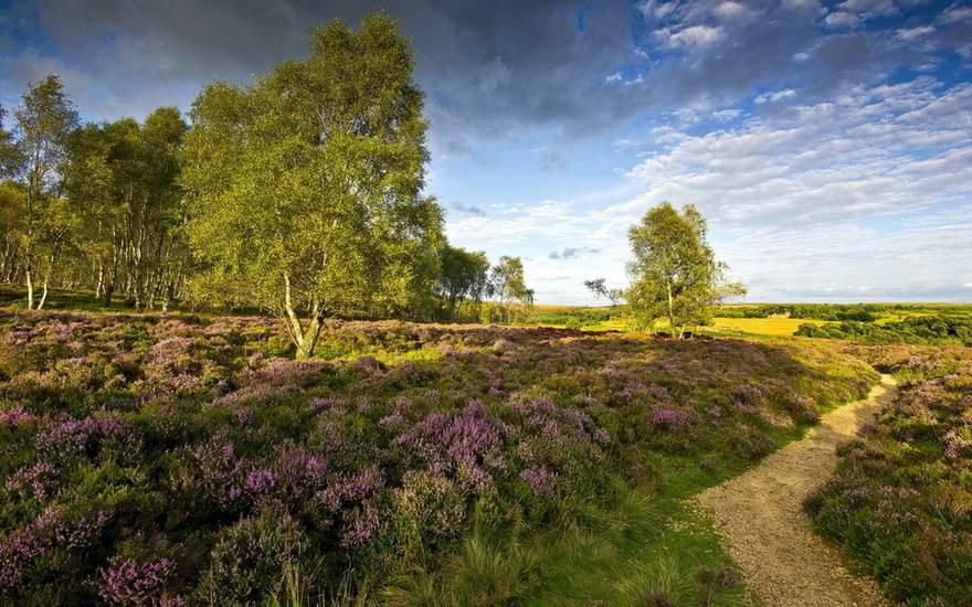 british Countryside 19