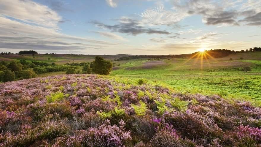 british Countryside 2