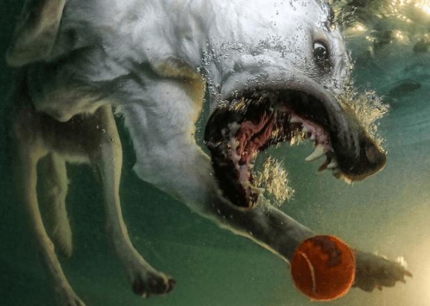 diving-dog-2-620x441