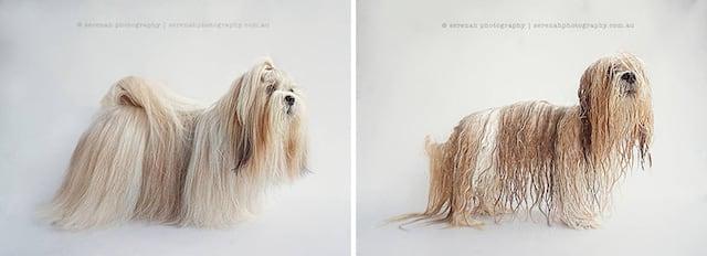 drydogs-3