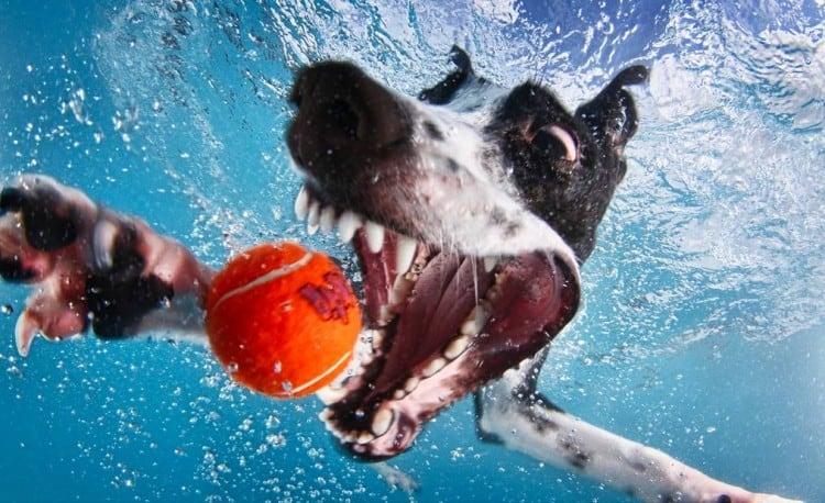 little-friends-photo-dogs-underwater-seth-casteel-normal