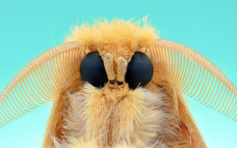 Extreme Macro Close-Ups Of Insect Faces by Yudy Sauw 8