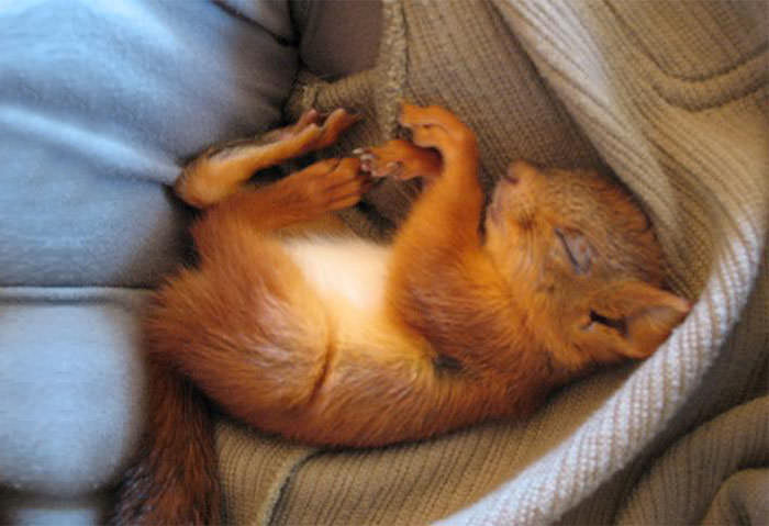squirrel-6