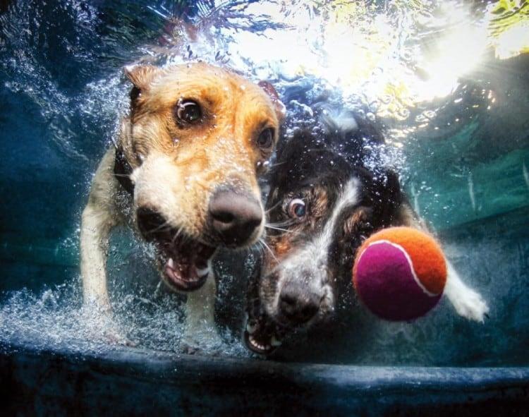 underwater-dogs-2013-calendar