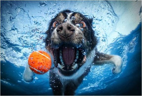 underwater-dogs-seth-casteel-2