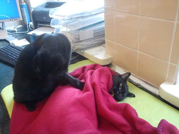 veterinary-nurse-cat-hugs-shelter-animals-radamenes-bydgoszcz-poland-7