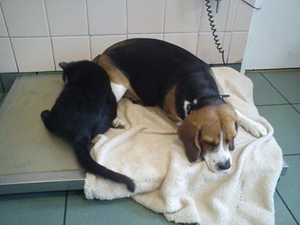veterinary-nurse-cat-hugs-shelter-animals-radamenes-bydgoszcz-poland-8