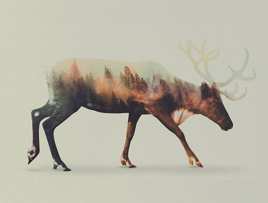 animals_03