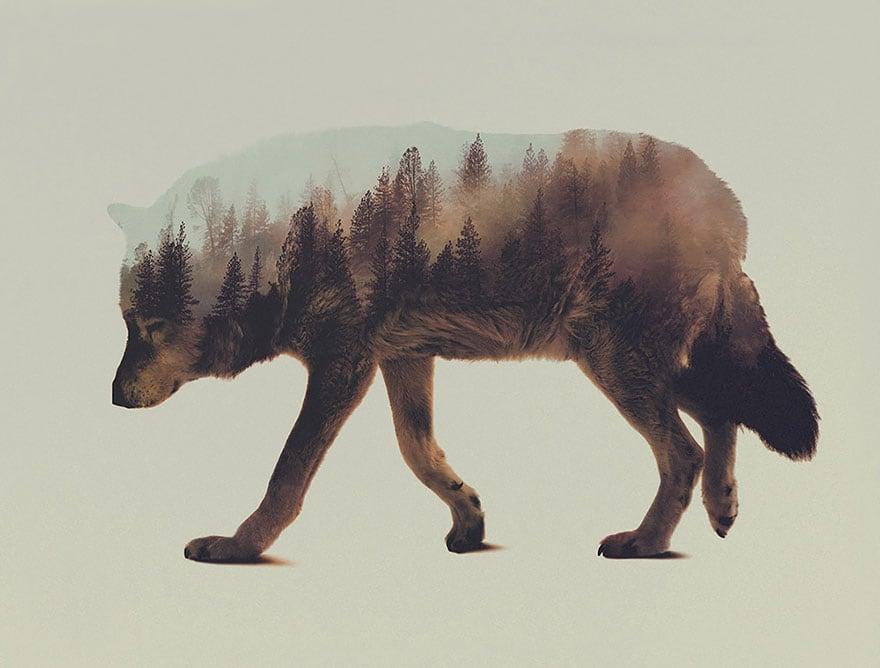 animals_06