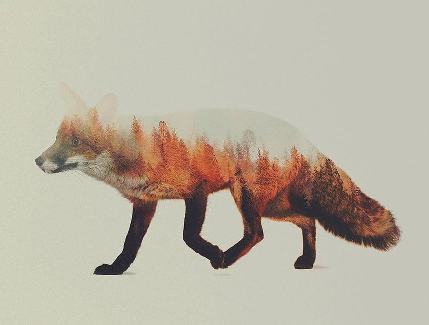 animals_07