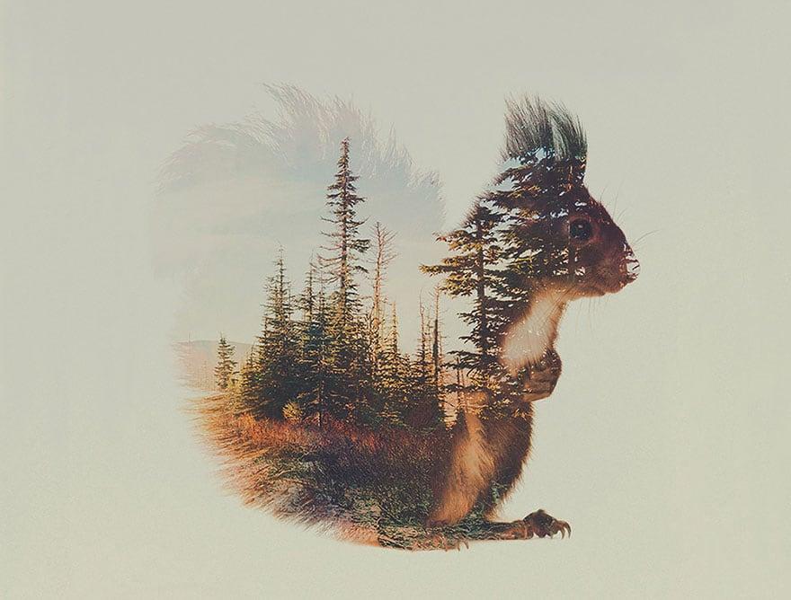 animals_08