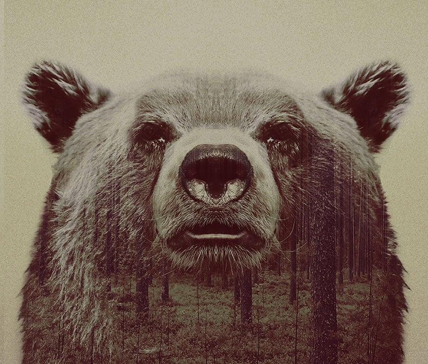 animals_10
