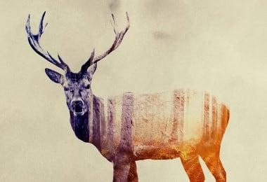 animals_12