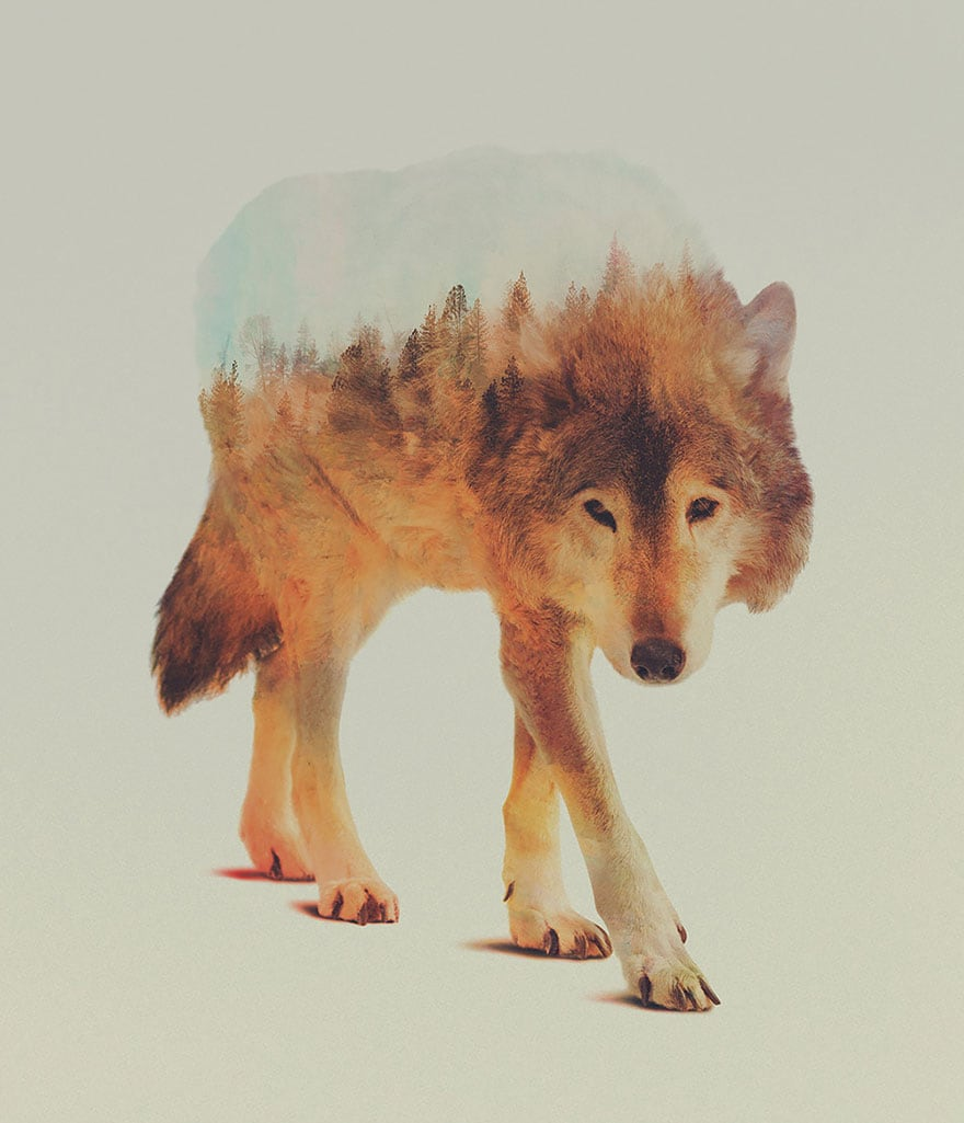animals_13