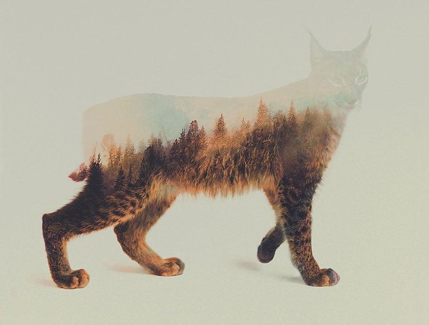 animals_14