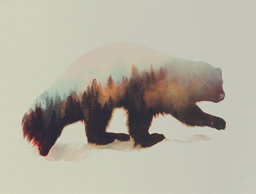 animals_16