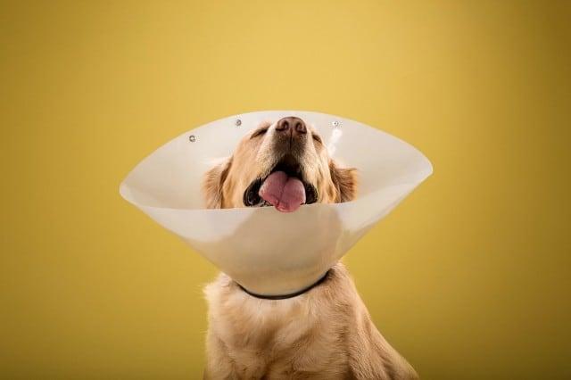 dogcones10-640x426