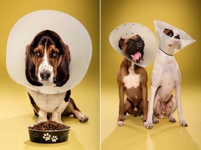 dogcones12-640x480