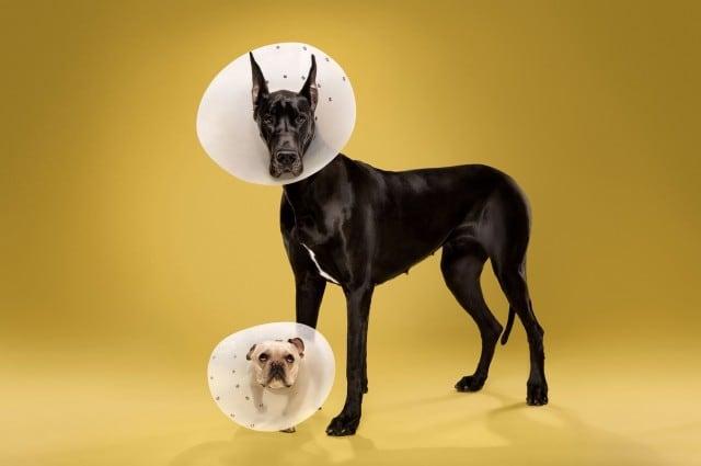 dogcones5-640x425