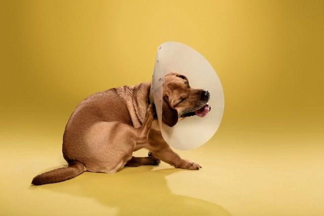 dogcones6-640x426