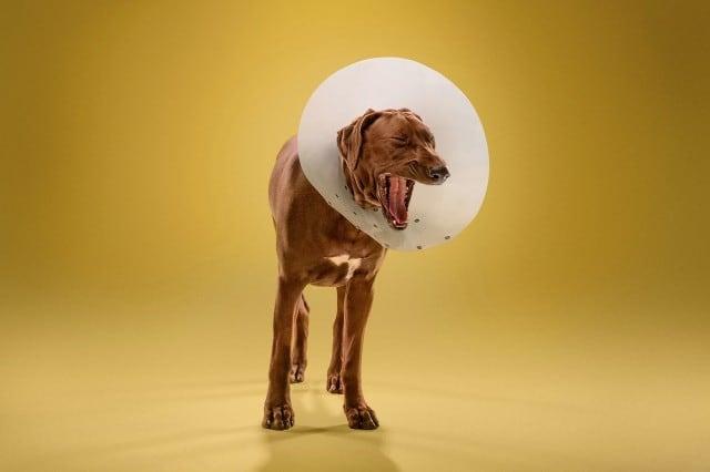 dogcones8-640x426