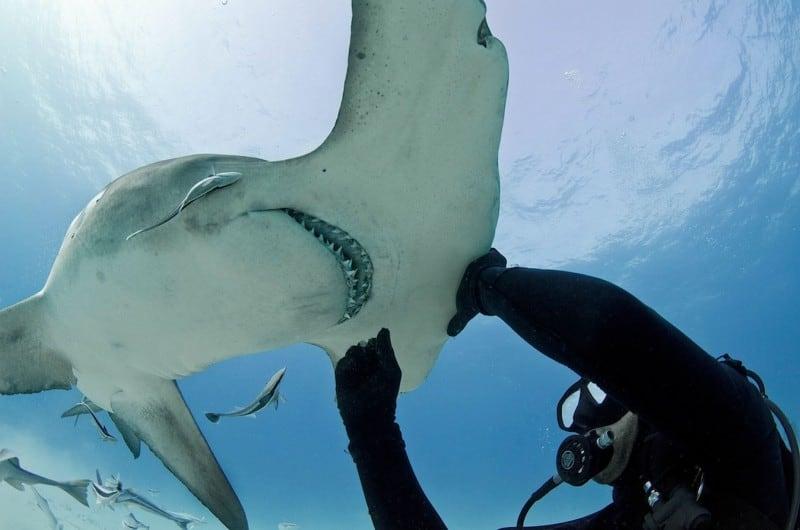 sharkwhiser