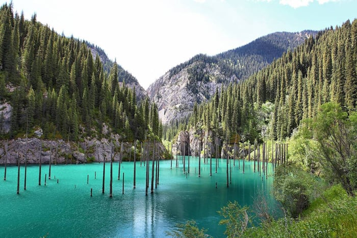 Sunken-forest-Kazakhstan1