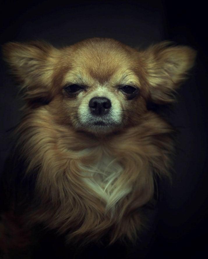Vincent-Legrange-Expressive-Animal-Portraits-4