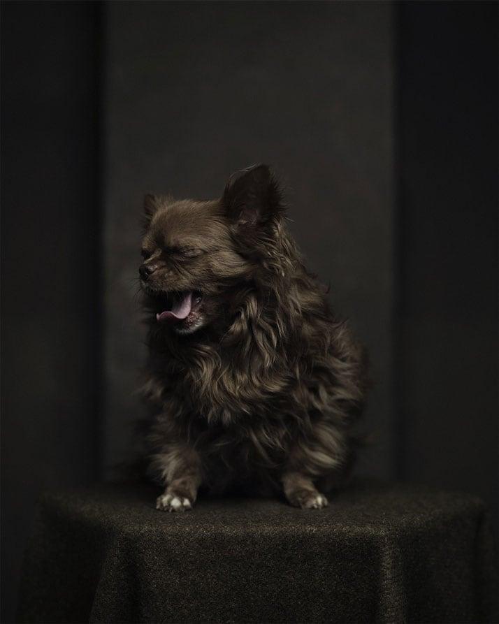 Vincent-Legrange-Expressive-Animal-Portraits-5