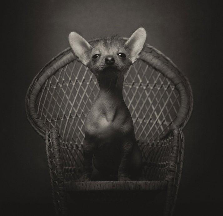 Vincent-Legrange-Expressive-Animal-Portraits-6