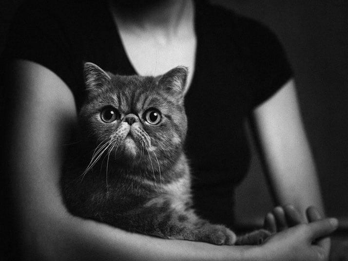 Vincent-Legrange-Expressive-Animal-Portraits-8