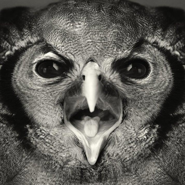 Vincent-Legrange-Expressive-Animal-Portraits-9