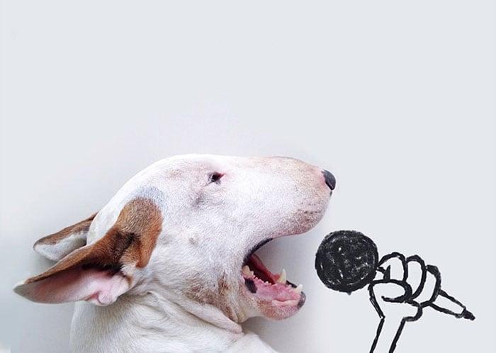 jimmy-choo-bull-terrier-illustrations-rafael-mantesso-coverimage