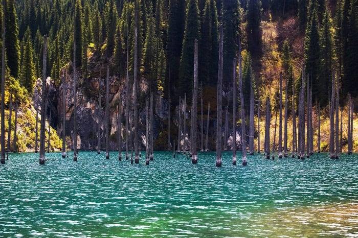 sunken-forest-kazakhstan-5