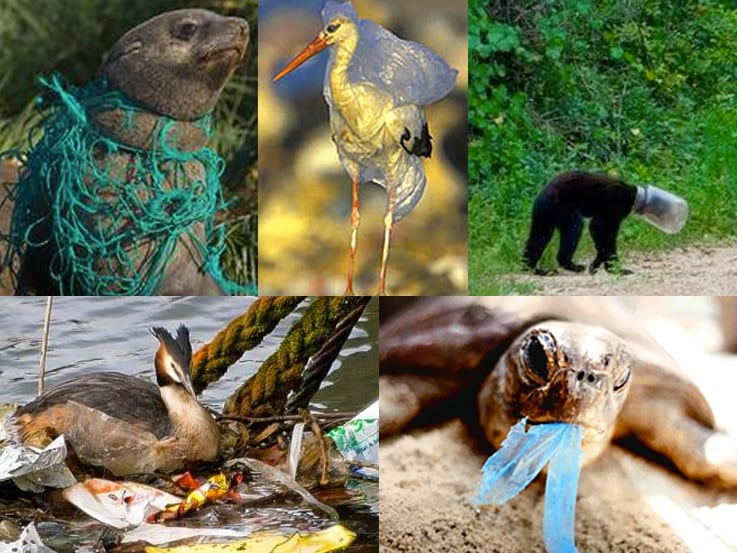 plastic pollution effect on wildlife