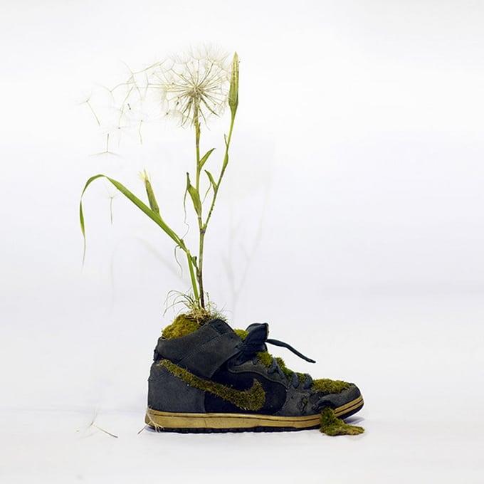 Mr Plant01