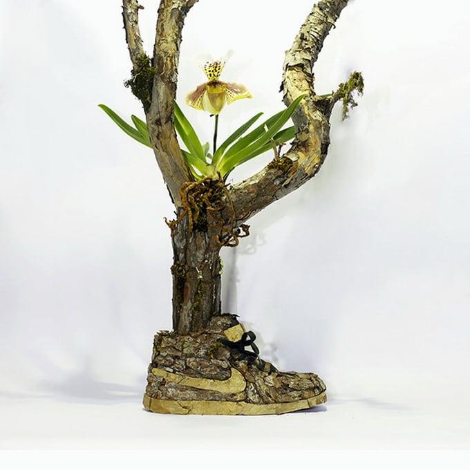 Mr Plant06