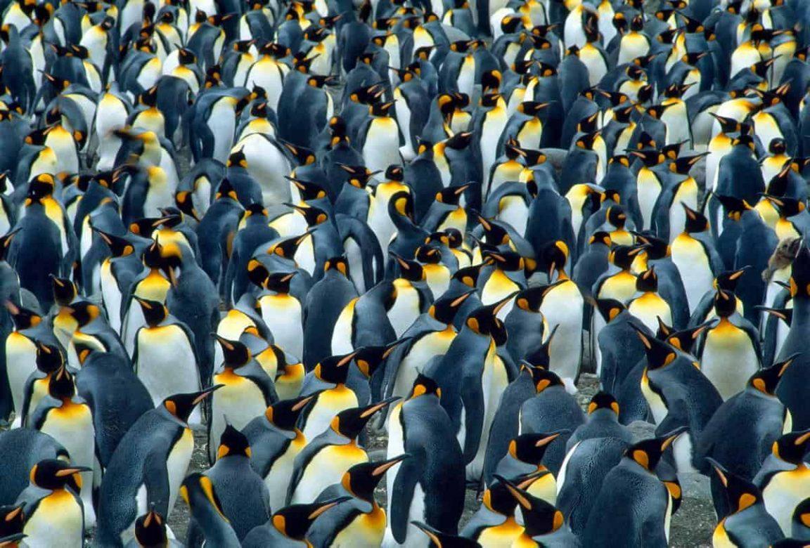 amazing animal colonies