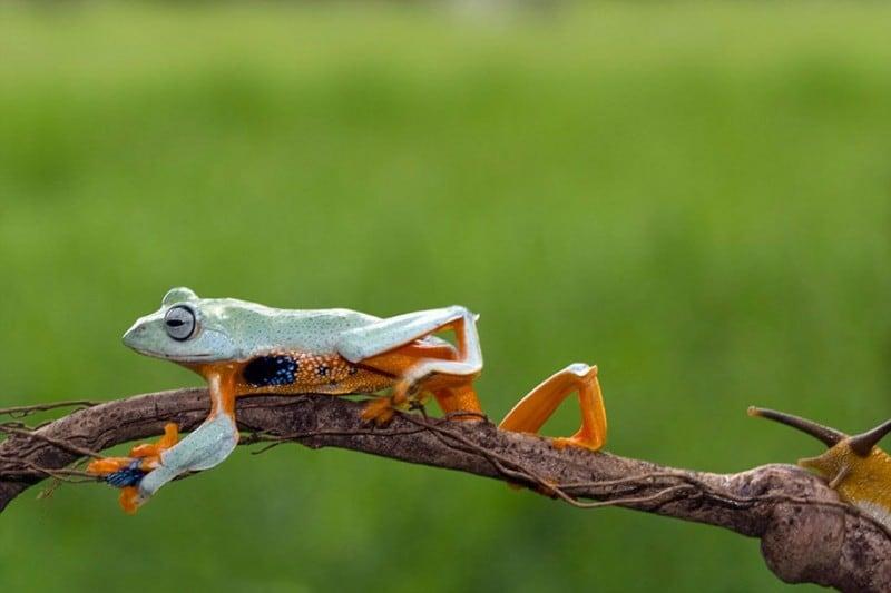 funny-animals-frog-riding-snail-kurito-afsheen-indonesia-6