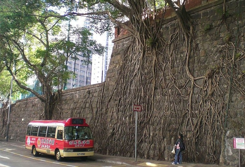 trees growing on concrete