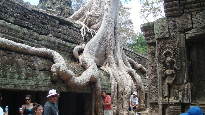 amazing tree photography