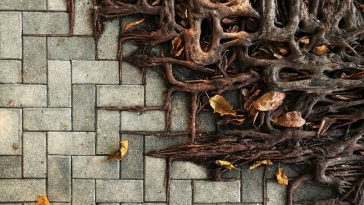 tree roots growing on concrete 2 1