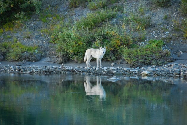 Noatak River, Gates of the Arctic National Park and Preserve