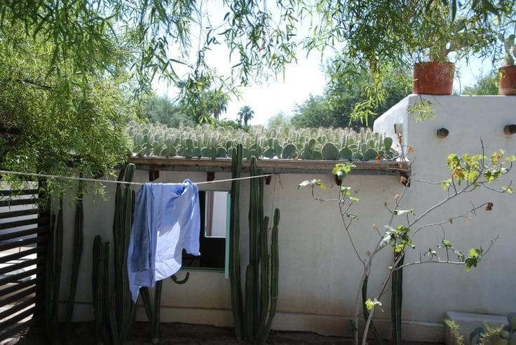 cactus roof smaller