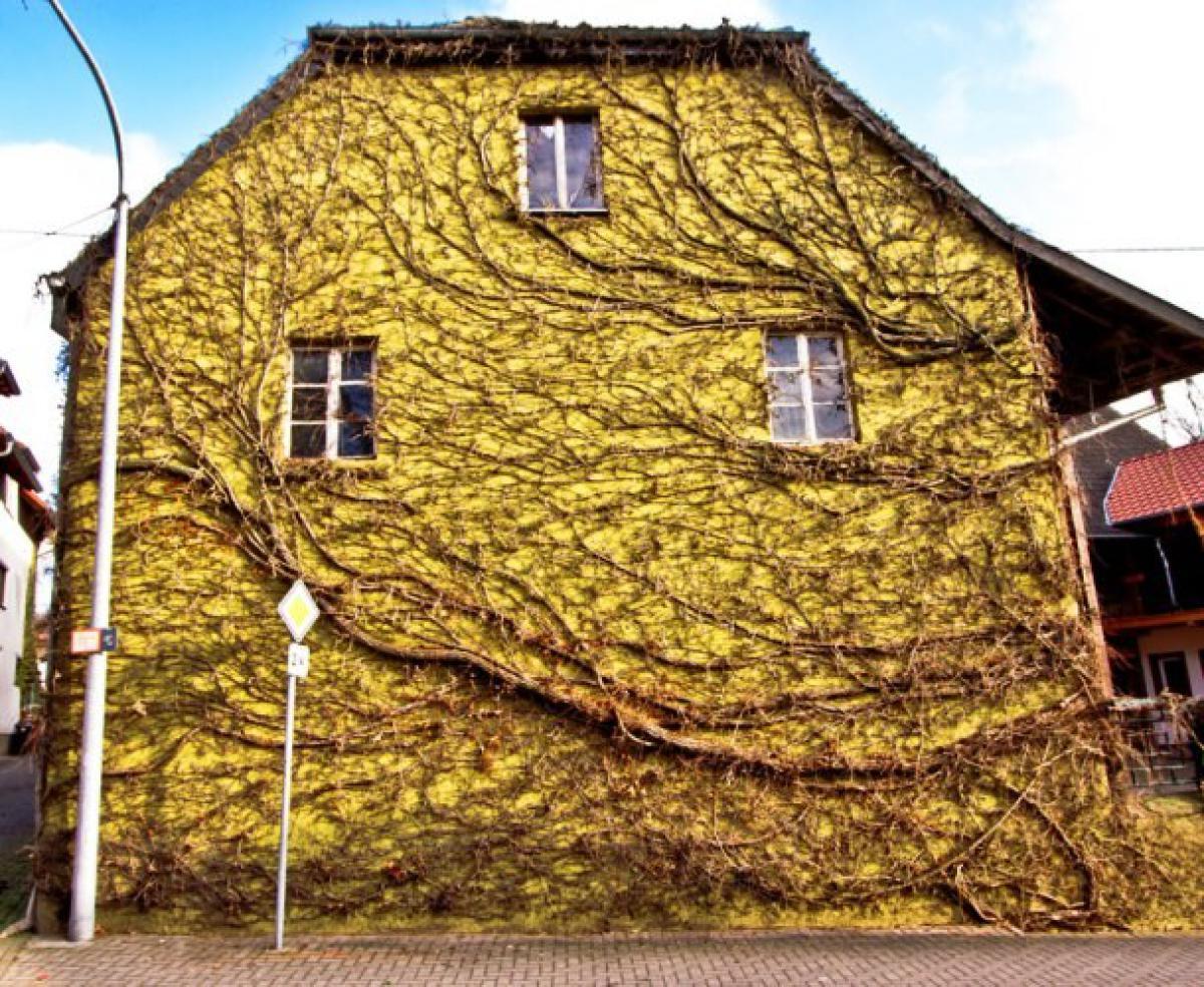 chris-pirillo-com-building-vines-610x500-UGh5JyfY1
