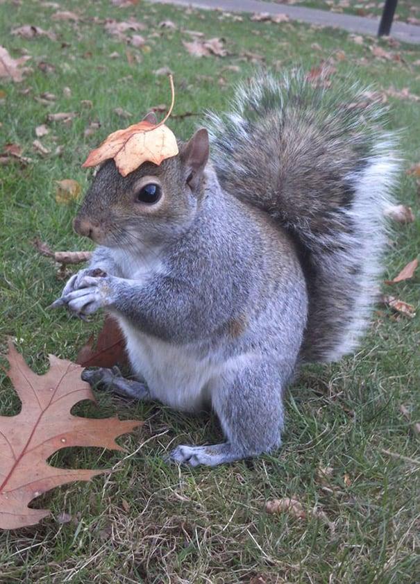 costume-squirrel-whisperer-sneezy-nary-krupa-43