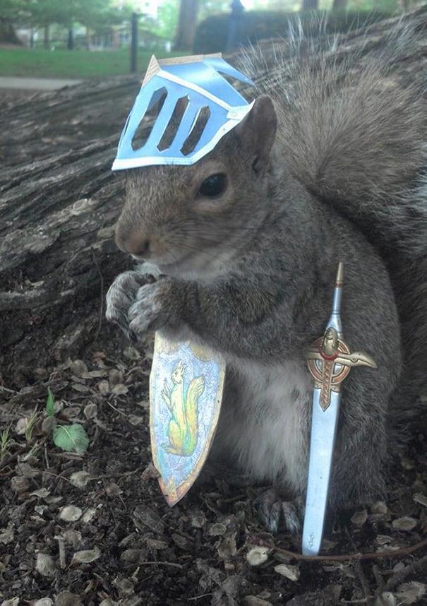 costume-squirrel-whisperer-sneezy-nary-krupa-50